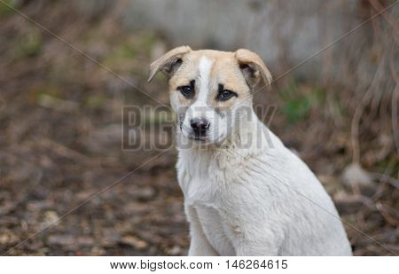 Portrait of adorable mixed breed stray puppy with sad face.