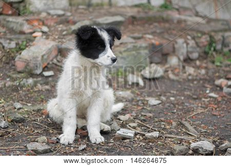 Adorable mixed breed stray puppy dog .