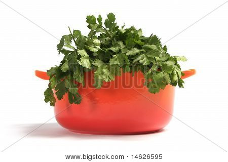 cast iron cooking pot with coriander