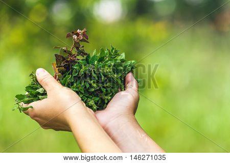 full hands of mint. full hands of mint