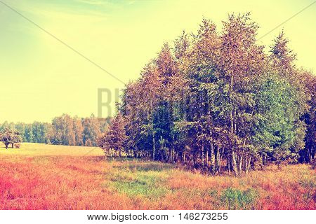 Autumn landscape. leaves. Colorful trees. Indian summer