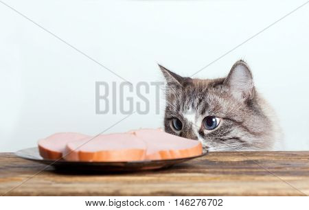 hungry cunning cat is looking at the sausage on the plate