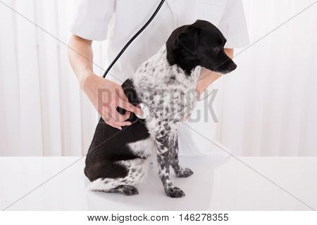 Close-up Of Vet Examining Dog With Stethoscope In Hospital