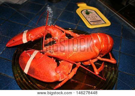 Pre-Boiled Lobster Unfortunately awaiting a Gourmet Meal