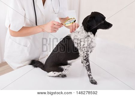 Close-up Of A Vet Examining Dog's Hair With Magnifying Glass