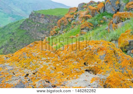 The golden lichen on the grey boulder with the rocky on the background Saro Georgia.