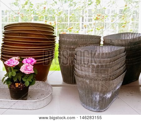Roses and retro style metal flower pots on a shelf. Gardening.