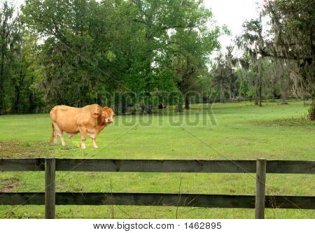 Brama In The Grass