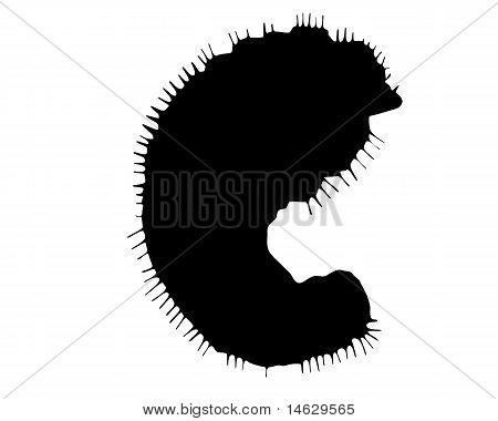 Bark-beetle Grub