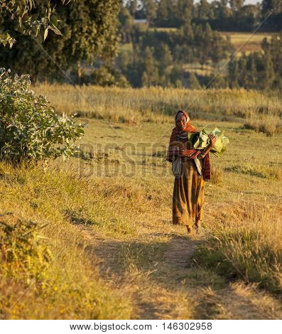 OROMIA, ETHIOPIA-NOVEMBER 6, 2014:Unidentified woman carries banana leaves through a field in the Ethiopian Highlands