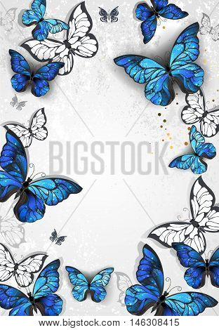 Frame with blue realistic morpho butterflies on gray textural background. Design with butterflies. Morpho. Design with blue butterflies morpho.