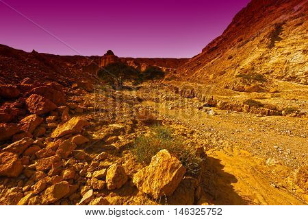 Canyon and Rocky Hills of the Negev Desert in Israel at Sunset