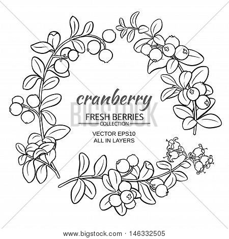 cranberry plant vector set on white background