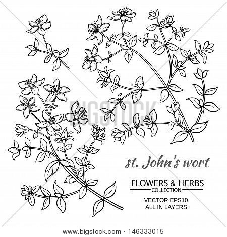 St. John's wort vector set on white background