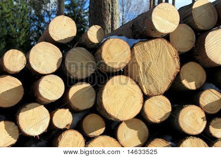 Spruce Logs Piled Up