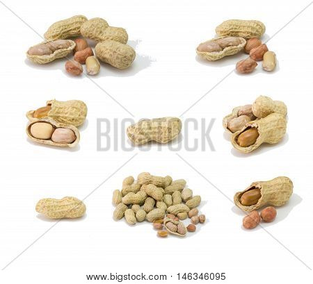 peanut isolated on white groundnut dry peanut