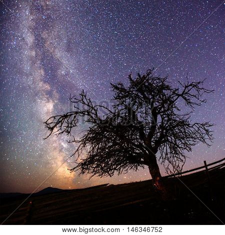 dry tree on a background of the sky with the Milky Way.