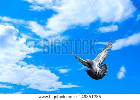 Beautiful dove in a blue sky symbol of faith