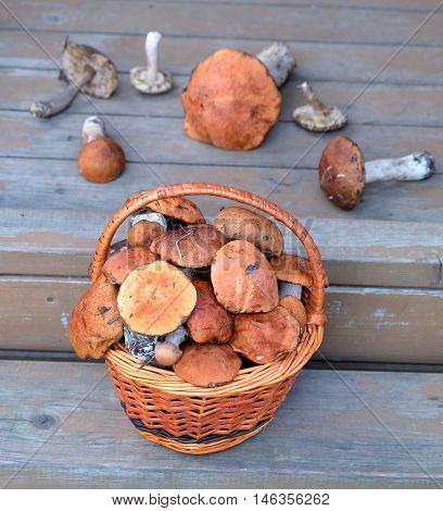 Still life with crop of many edible mushrooms in brown wicker basket on wooden house porch steps outdoor front view vertical