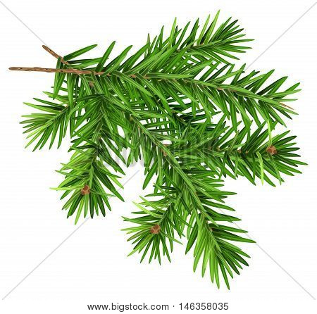 Green fluffy fir branch. Isolated on white vector illustration