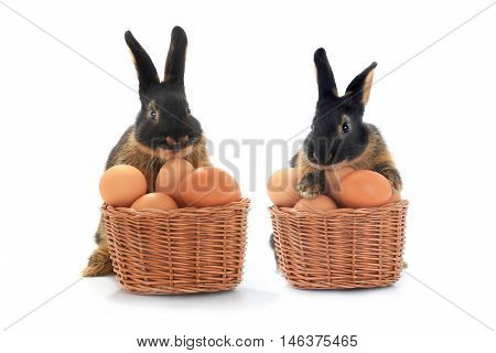 two rabbit near a bucket with easter eggs