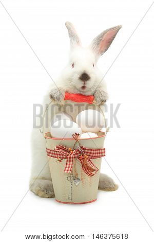 white rabbit near a bucket with easter eggs