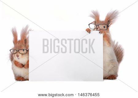 two squirrels wearing spectacles with a leaf for the text.
