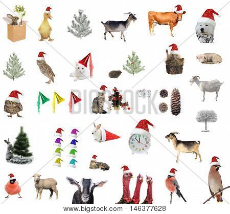New year comes animal on a white background