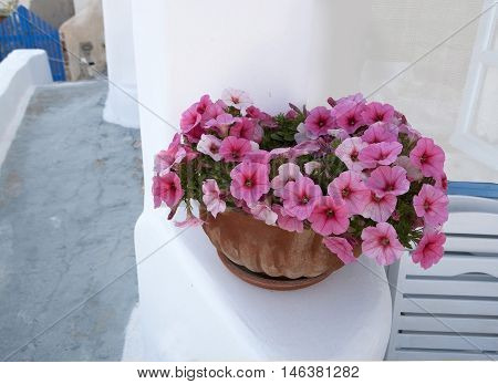 pot with pink petunias on the terrace