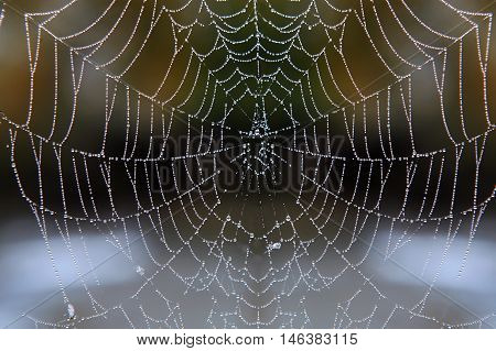web with drops of dew in the early morning