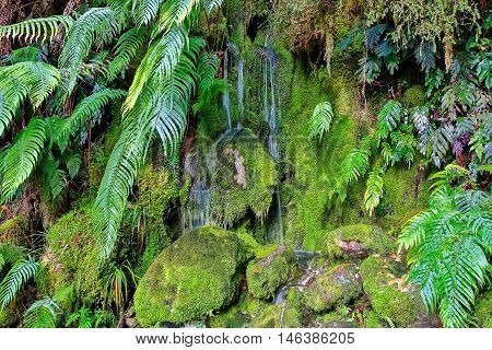 The Green Mossy Wall With Rocks Streams With Water.