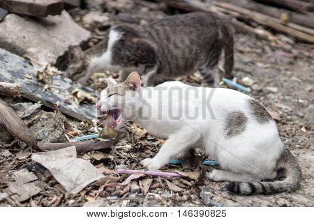 Stray Cat Eat Fish Bone