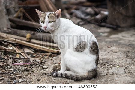Stray Cat Lost Home