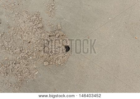 Stone Shells on the beach With hole of crab. Crab design/Specific design made by little crabs on a beach. : copy space for add text above and may be used as background :