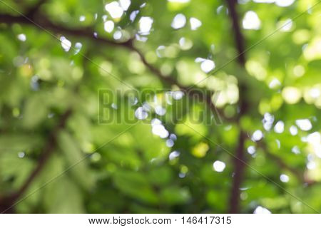 Sunlight And Fresh Green with trees and bokea