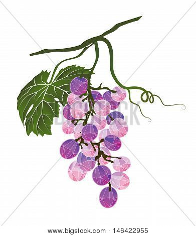 Bunch of Pinot Noir grapes stylized polygonal