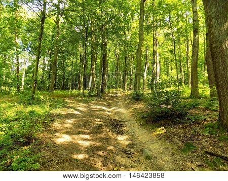 Many high deciduous trees in deciduous forest in wild nature during sunny day