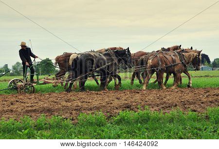 Ronks Pennsylvania - June 4 2015: Young Amish farmer riding a plow pulled by a team of six horses tilling a field on his family farm