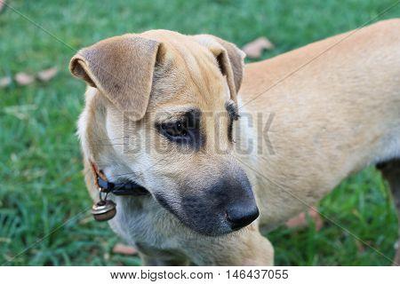 Dog Depression, Animal, Eye, Animals, And, Pets