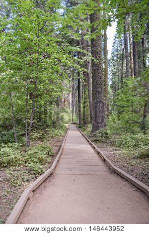 Hiking Trail in Big Trees: hiking trail in Big Trees National Park, California
