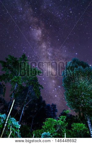 Milky Way and some trees. In the mountains of Bolaven Plateau Laos.