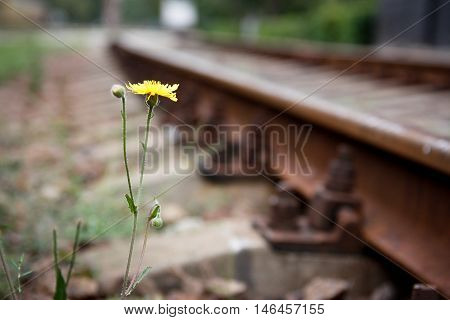 Yellow flower on the side of the railroad tracks.