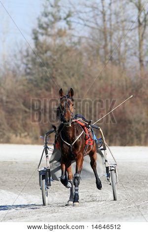 Harness racing training in Ljubljana Slovenia