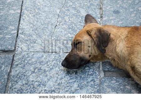 Old Stray Dog Resting on the Pavement