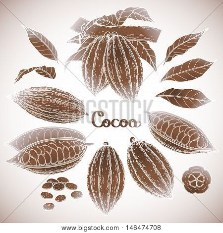Graphic cocoa fruit collection isolated on white background. Hand drawn exotic cacao plant in brawn colors