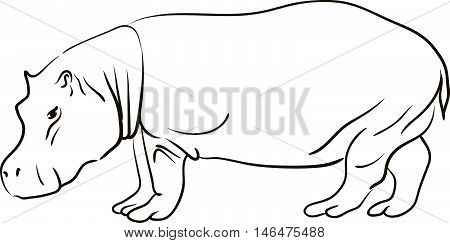 Hand drawn line art black and white sketch of a cartoon hippopotamus on a white background