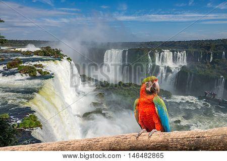 The Macaw Parrot At The Cataratas Of Iguacu