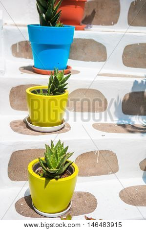Traditional greek colorful flowerpot with flowers on steps in greek island