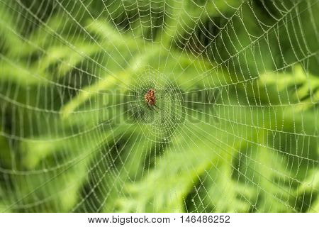 Spider In Webs