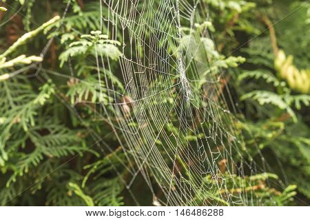 Spiders Webs To Swing On The Trees And Shrubs